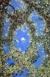 Giovanni da Udine Particolare. Pergolato delle Logge del primo piano. Città del Vaticano, Palazzo Apostolico [1024x768]